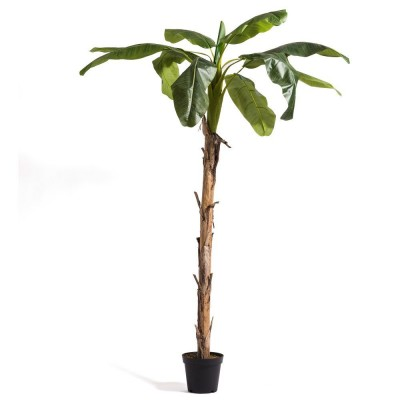 Banana boom in pot H.280cm-Decoratie lente